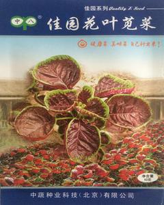 佳园花叶苋菜